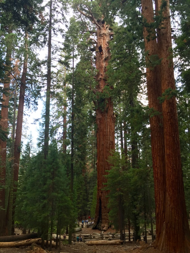 General Sherman Tree - Sequoia National Park - Sequoia - California - National Park - Quinby & Co.