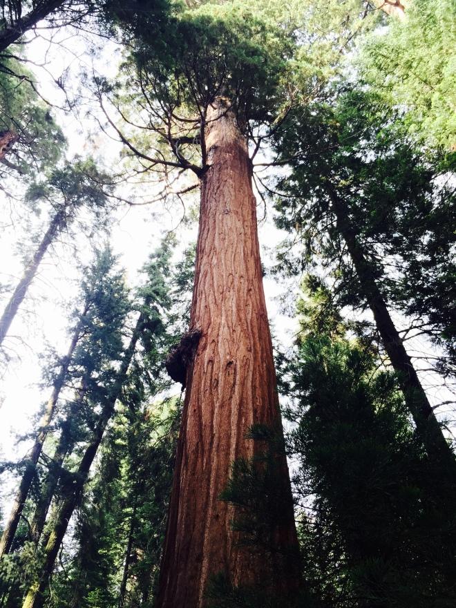 General Sherman - General Sherman Tree - Sequoia National Park - Sequoia - California - National Park - Quinby & Co.